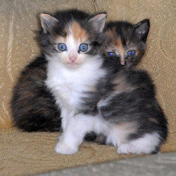 Kittens by Vesuvianite on Flickr.