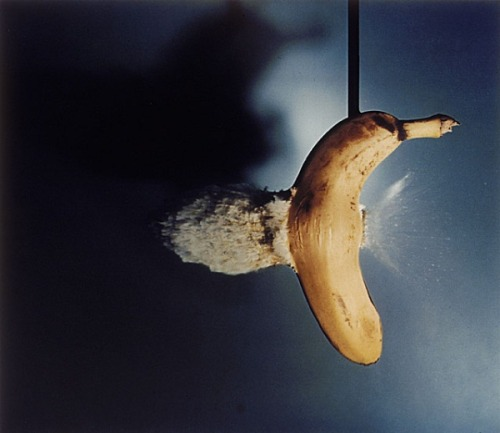 nprfreshair:  3rdofmay:  The art: Harold Edgerton, Bullet through Banana, 1964, printed 1965. The news: It's food week on NPR's Fresh Air, so I'm celebrating one of my favorite public radio programs by featuring art that shows artists' fascination with Fresh Air's topics this week. Today's program will be all about bananas.  The source: Collection of the Los Angeles County Museum of Art, San Francisco Museum of Modern Art.  faster than a speeding banana.