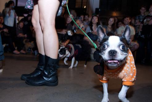 check out these amazing photos from the HIPSTER PUPPIES PAGEANT courtesy of jacob from time out new york. thanks to lena @ powerhouse, oscar the winning pooch, and all the pups and pup-owners who made this night more special than we could have ever imagined.
