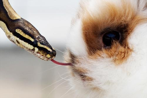 mothernaturenetwork:  Bunny-sniffing python: A python sniffs a tiny fluffy rabbit with its tongue at the Leipzig Trade Fair in Leipzig, Saxony, Germany, on Aug. 17.The best animal photos of August