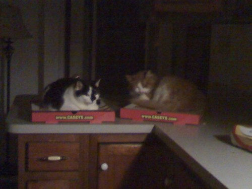 veganpizzafuckyeah:  reblogged from getoutoftherecat:  get off of there cats. i did not buy you individual warming seats. i bought myself two pizzas and i don't need your judgement.