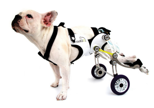 Stop the madness! Have you heard about this wheelchair for dogs? Get ready to bawl your eyes out.  As any dog owner can attest, injuries to canine legs are some of the  most common and painful afflictions to befall our four-legged friends.  Although dogs usually manage to adapt to their new situation, some dog  owners often decide to put an injured dog to sleep rather than subject  him to a life of perceived misery. That wasn't acceptable to Israeli  industrial design student Nir Shalom, who has designed a concept called  Amigo, a lightweight, durable walking aid for dogs who have lost the use  of their hind legs.  Continued…
