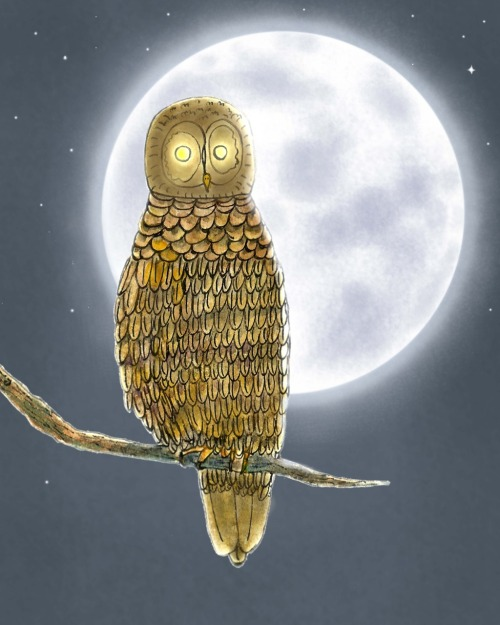 Owl night… (Mid-Autumn Festival part 3)