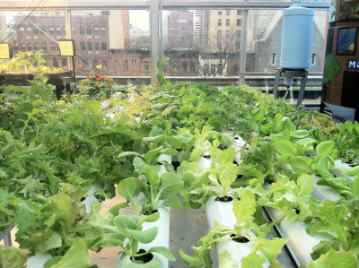 "good:   Growing produce on your roof is a productive way to take advantage of the space, but is it possible to make it commercially viable on a larger scale? A new company's business model may show the way. New York-based BrightFarms, which builds rooftop greenhouses, hopes to turn a profit while cutting shoppers' ""food miles"" down to zero by growing vegetables where people buy them: the supermarket. BrightFarms is trying to convince major supermarket chains to hire them to cover vacant roofs with heirloom tomatoes, salad greens, and other produce. The company's business plan is simple: they handle the labor and expense of farming—greenhouse design, construction, planting, and harvest—while participating supermarkets sign a 10-year contract agreeing to purchase whatever is grown on their rooftop. A store's rooftop garden can produce as much as 500,000 pounds of produce a year, BrightFarms told Edible Manhattan.  Read more on GOOD →"