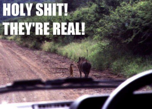theeclecticgentleman:   TIMON & PUMBAA!!!!  Still love it.