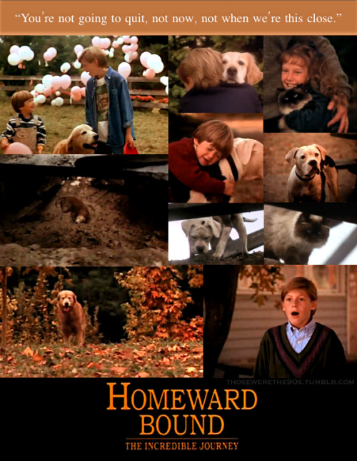 Favorite Movies of the '90s Homeward Bound: The Incredible Journey | 1993