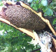 "The feud over a bee hive in Fort Green has set off my Google ""NERD ALERT"" today. I imagine that these hardcore bee enthusiasts will settle it as the bees would—elaborate thorax dance followed by stabbing each other to death… and ironically dying in the process.   (via NYTimes.com)"