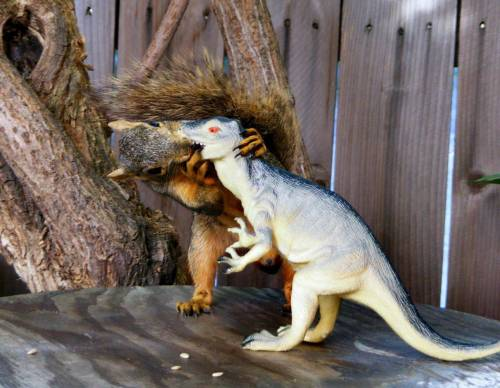 plus5mace:  YES SQUIRREL KISS!!! thedailywhat:  Everybody Needs A Hobby of the Day: A squirrel sucks face with a dinosaurs in a photo that Redditor ecn04002 says took him 45 minutes to snap:  I had to get him close to the table with a trail of seeds… slowly  trusting me as I would move around him. Then got him to climb up the  table where his precious seed was waiting for him… his only  requirement was a cross-species kiss.  Passing the time: You're doing it weird. [reddit.]