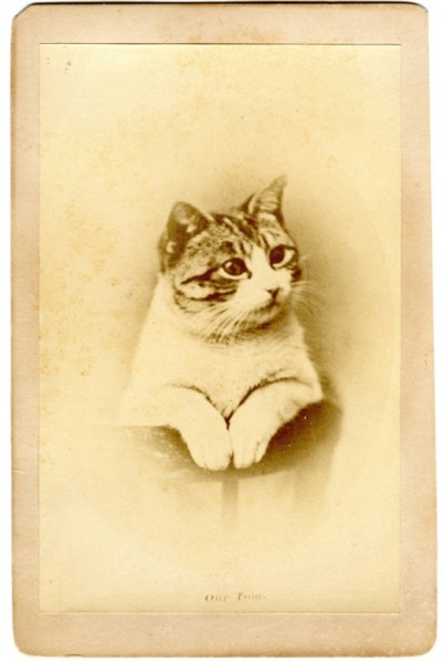 victoriasrustyknickers:  'Our Tom'  Portrait of a Kitten - 1870s