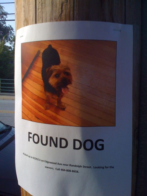 myexternalharddrive:  Dog found on 8/29 at Edgewood Ave near Randolph St. Call 404.808.8658 with any info. Please reblog Atlanta.