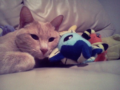 poke-problems:  vaporeon is a pillow, according to my cat.