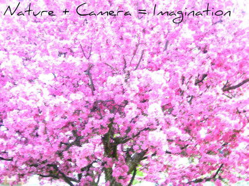Let your imagination soar :D