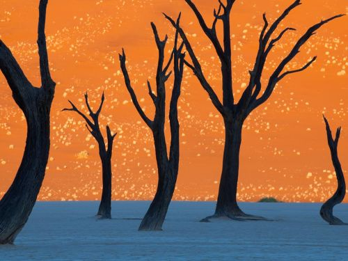 "wonderwooman:  Camel Thorn Trees, Namibia ""Tinted orange by the morning sun, a soaring dune is the backdrop for the hulks of camel thorn trees in Namib-Naukluft Park."" Photograph by Frans Lanting, National Geographic can you believe this is real?"
