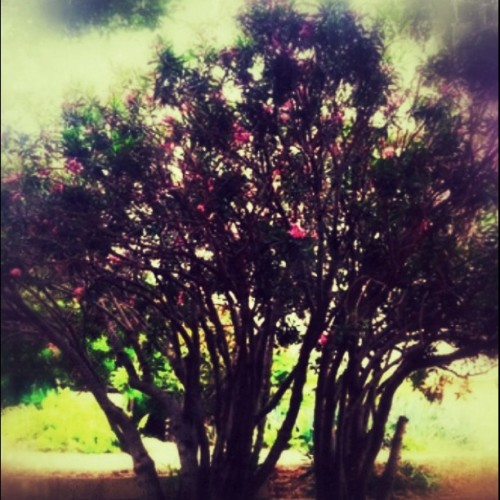 #ilovetrees  (Taken with instagram)