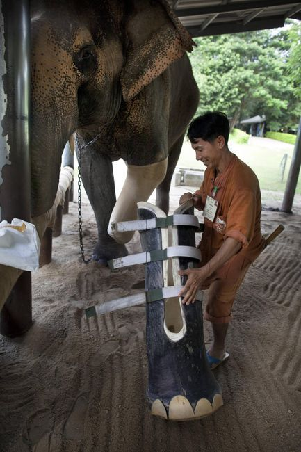 I want to work in the world's only elephant hospital!