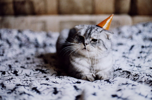 I want this kitten for my birthday pleeeeeeeease!