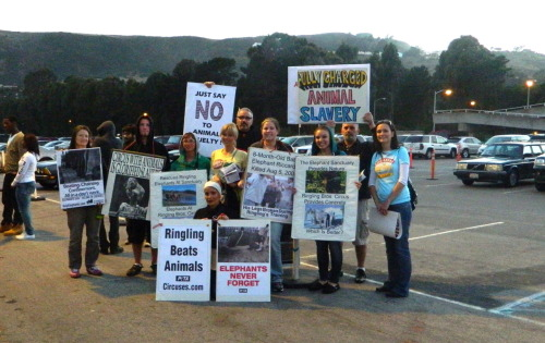 findingthebeautyofit:  Protest against Ringling Brothers Circus today (9/1)