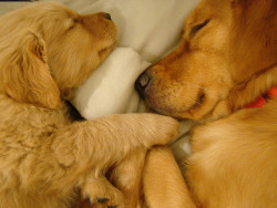 Sharing the bed…tooo cute!!! by Deniseop on Flickr.