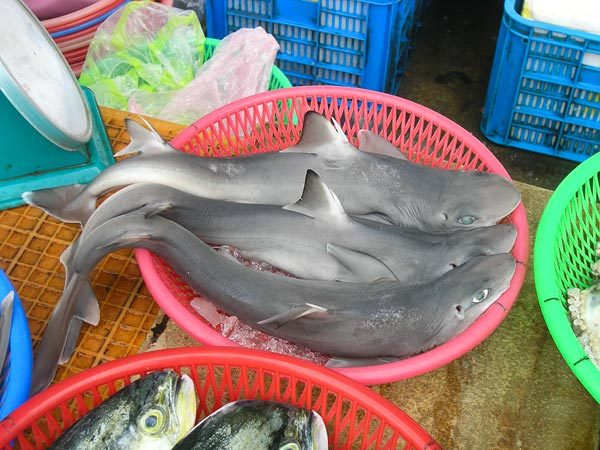 "The new shark species, Squalus formosus, on display in a Taiwanese fish market.  Photograph courtesy William White John Roach  for National Geographic News  Published September 1, 2011 It's unlikely anyone's ever complained, ""Waiter, there's a new species in my soup."" But the situation isn't as rare as you might think.   A monkey, a lizard, and an ""extinct"" bird have all been discovered en route to the dinner plate, and now a new shark species joins their ranks, scientists report."