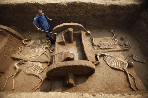 "alphacaeli:   ""The remains of five chariots and 12 horses have been excavated at an archaeological site in Luoyang, China. The finds are dated from the Eastern Zhou Dynasty (770BC-221BC) and are suspected to belong to a minister of that time""  Beautiful preservation."