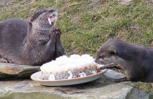 bunnyfood:  nom  LKF: Otters say grace. But they don't have the patience wait to start eating until they are done praying.