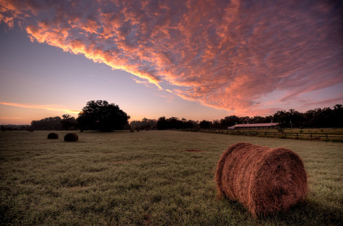 Sunrise on the Farm by ~Life by the Drop~ on Flickr.