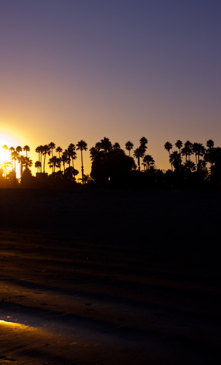 Sun setting over palm trees in Santa Barbara.
