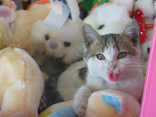 shellsonthebeach:  Kitten dispenser (2) by Begemot on Flickr.