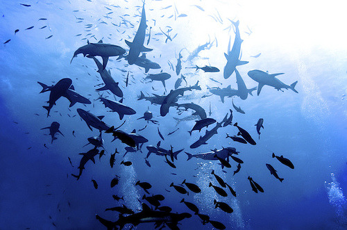 op1um:  shark feed at north horn (by melissa.fiene)