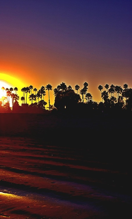 Sunset over palm trees on West Beach in Santa Barbara.  HDR from single image.
