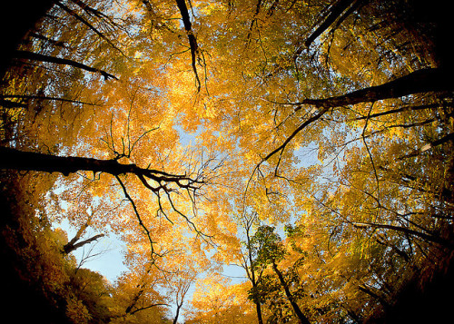 Wisconsin Canopy by Todd Klassy on Flickr.
