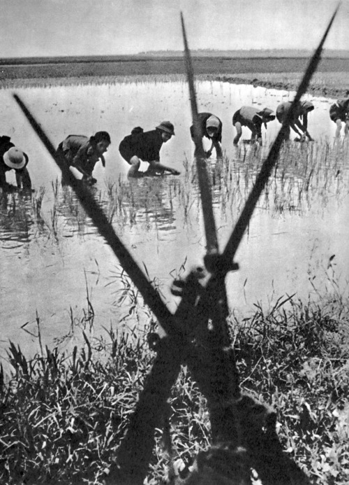 Peaceful work, 1969, Vietnam by V. Sobolev