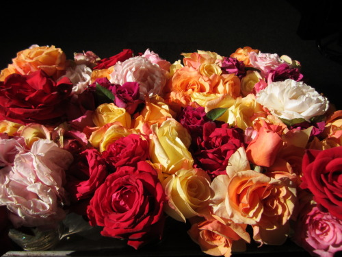 The last of the summer's garden roses for the tables at the 40th Anniversary party