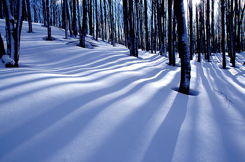 celines:  Collingwood Trees (by Peter Bowers)