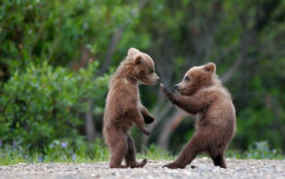 Fighting Baby Bears