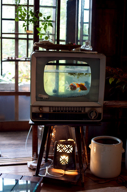 People who have insomnia should try watching fish TV? plenty of bananas, chamomile and a boyfriend or girlfriend that is the best, well I am going to eat my corn it is lunch time here…we country hippies love our corn and cornbread  LOL