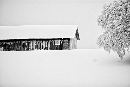 equanimities:  Snow covered (by Conny Lundgren)