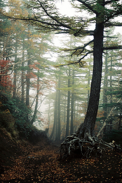 The Aokigahara forest, Japan