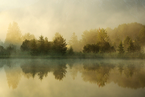 woodendreams:  (by Michael Gross)