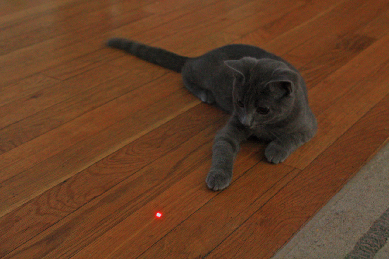 I'm the cat, the dot is the internet.
