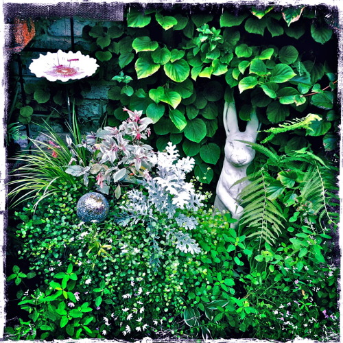 Shade garden….late summer in a little alcove in one of my client's gardens.