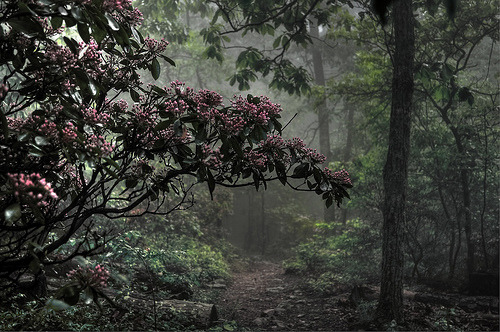 woodendreams:  (by jaegemt1)