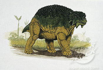 Scutosaurus (Shield Reptile), not to be confused with Sauropelta was a large, armoured, herbivorous pareiasaur, which is a synapsid that lived in the Permian with stocky bodies, short tails, and highly sculpted and adorned skulls. That's right, synapsid, not dinosaur. Learn more about synapsids with my here. Scutosaurus is found in the Russian Permian beds, with some found standing, suggesting that they got stuck in mud or swamps while feeding. It was likely aquatic, but being that many fossils have been found mired in mud, it may be unlikely. Unlike most reptiles, Scutosaurus held its legs beneath it to support its great weight, rather than side sprawling, only endothermic vertebrates are known to do this today. It likely had well developed hearing due to a slender bone found in its ear.