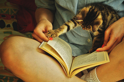yeahwriters:  Ooooooooh da kiddy reads da book.  I want a kitteh!