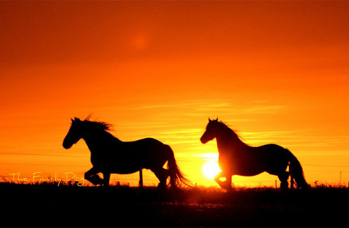 chaosdefined:  Sunset : horse Latitudes by The Family Dog on Flickr.