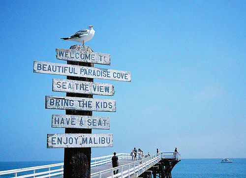 theworldwelivein:  Bird on Malibu Sign (by danielshapiro)   Oh Malibu