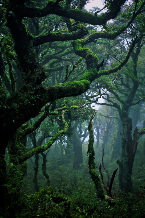 "ninbra:  Subtropical rainforest in Waikaremoana, New Zealand.   ""If we are to use our tools in the service of fitting in on Earth, our basic relationship to nature—even the story we tell ourselves about who we are in the universe—has to change.""   ~Janine M. Benyus~"
