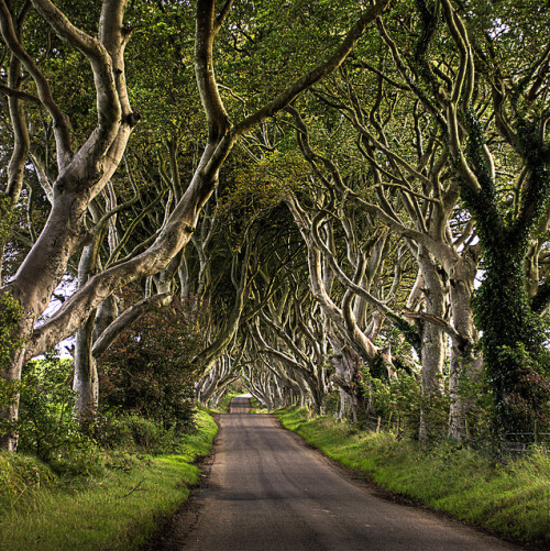 dazzlingagony:  Trees and Road photography by Etrusia UK, Ballintoy, Northern Ireland, Great Britain