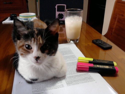 fuckyeahfelines:  This is why I can't study.  Gpoy. =^.^=