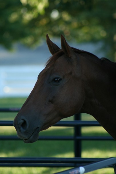 sinningincowboyboots:  morningline:  Funny Cide.  <3